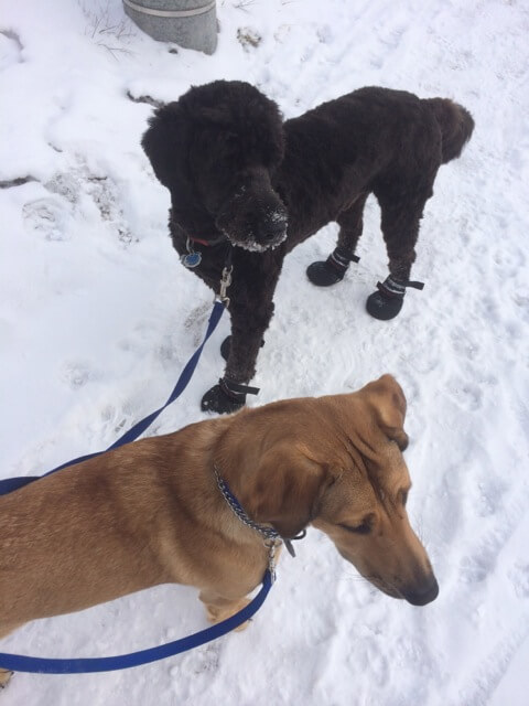 A dog walk in the winter in East York Toronto
